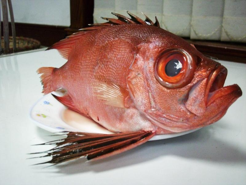 金目鯛(船釣現流)