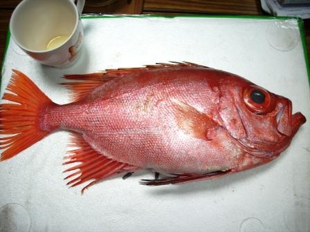 大眼鯛(船釣現流)bulleye